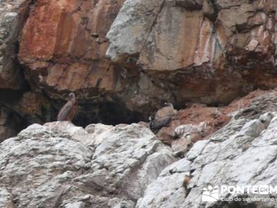 Parque Nacional Monfragüe - Reserva Natural Garganta de los Infiernos-Jerte;agencias senderismo mad